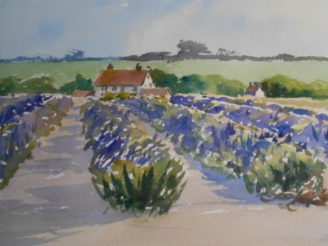 06-29 Through the lavender