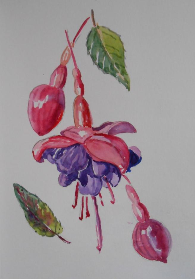 07-30 Garden Fuchsia