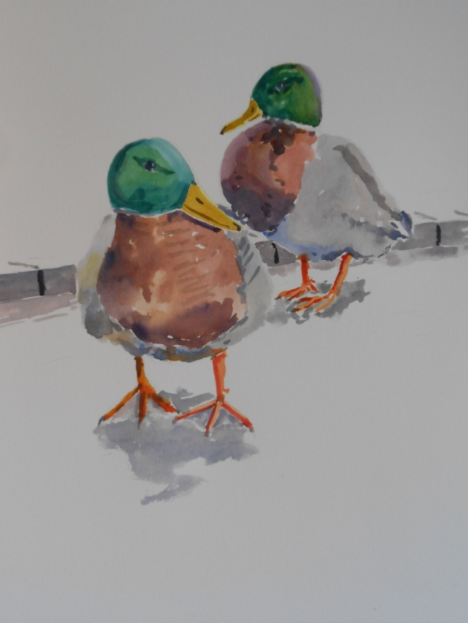 04-07 Two Ducks